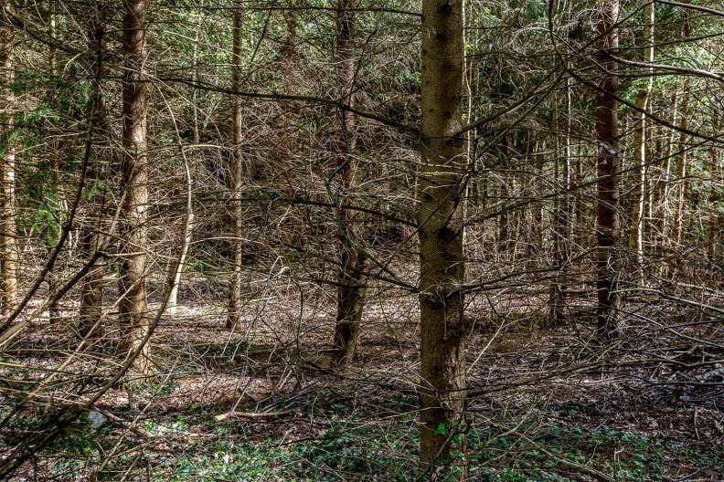 Het bos rondom Meeuwenveen Accommodaties
