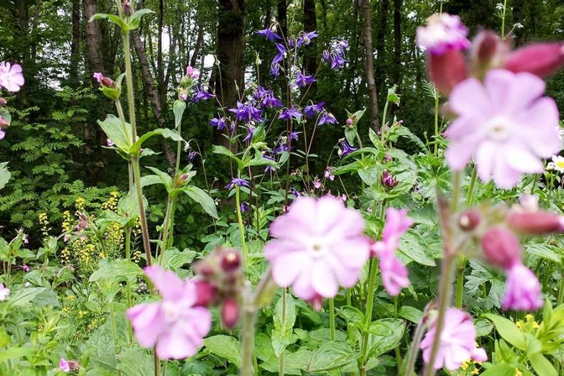 De borders op Meeuwenveen staan in bloei